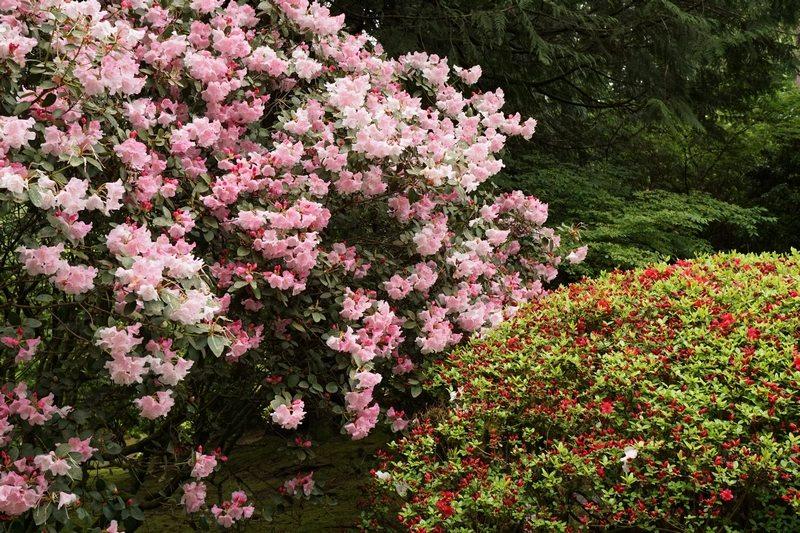 tn_japanesegardenplants